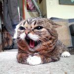 永遠の子猫リルバブ動画像特集!病気は小人症?大理石骨病?患っている病についても言及