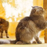猫の階段落ち動画がシュールすぎる!?この行動に至ったわけとは?