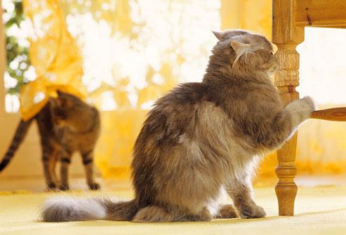 流れるように落ちていく猫の行動に隠された深いわけとは?