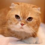 映画「高台家の人々」に出演しているヨシマサ役の猫の名前は?猫種などまとめ