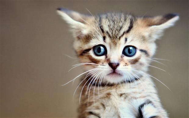 山口県の温泉旅館が猫の保護活動を開始!里親募集も視野に