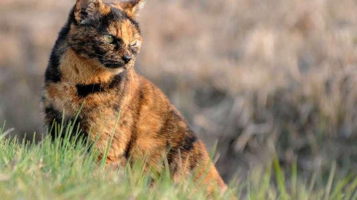 組み合わせ柄の猫たちの性格~三毛・黒白・サビ~