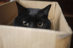 猫に段ボールが人気の理由にはわけがあった!?