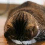 病気の可能性も!?猫のごめん寝に衝撃の理由が!ごめん寝2つの真実と画像まとめ