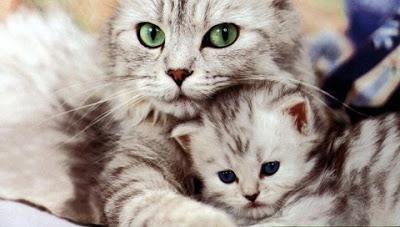 母猫に学ぶ子猫を教育するための3つの方法