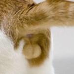 猫のお尻の動きから読む感情