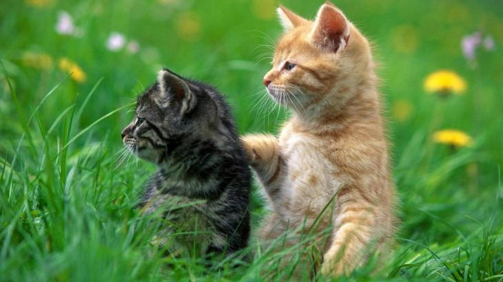 必要な栄養素から学ぶ子猫のキャットフード選び