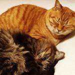 いまどきの猫が気を付けたい分離不安の傾向と対策