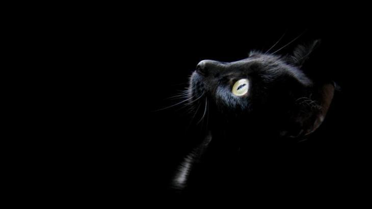 猫の平均値を知ると病気の予防になる説