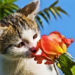 間違って食べると命の危険!?猫の危険な誤食ランキングトップ5