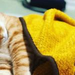 猫を飼うって大変?いいえ、むしろ幸せになります。メリットデメリット両面を解説