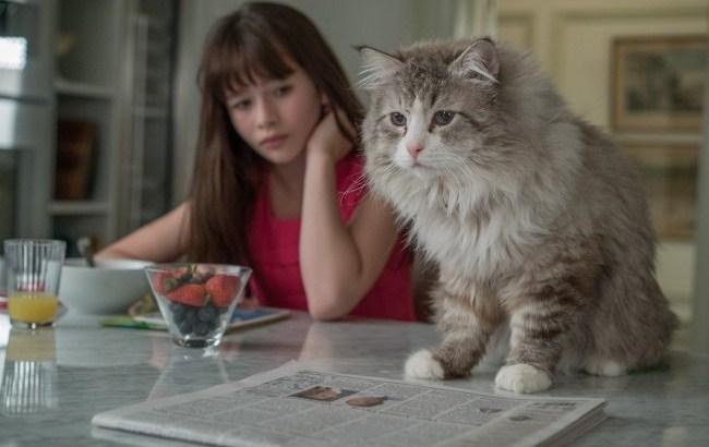 [最新猫映画]M・I・B最新作の主人公は猫!?キャストなどを紹介