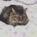 ホットカーペットで猫が駄目になった様子をご覧ください・・・