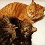 [丸まる猫の癒し]猫団子の画像と猫団子の作り方まとめ