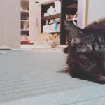 猫のジャンプ力が予想以上にヤバかった・・
