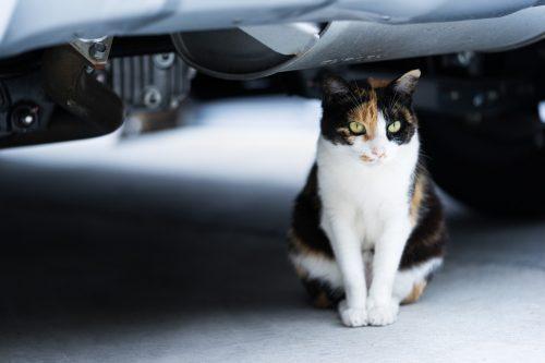 猫バンバンで事故予防の効果!危なくエンジンルームで命を落としそうになった猫がこちら・・・