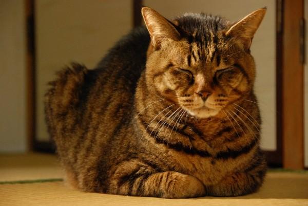 猫も認知症になる!?痴呆になった猫の行動と予防方法まとめ