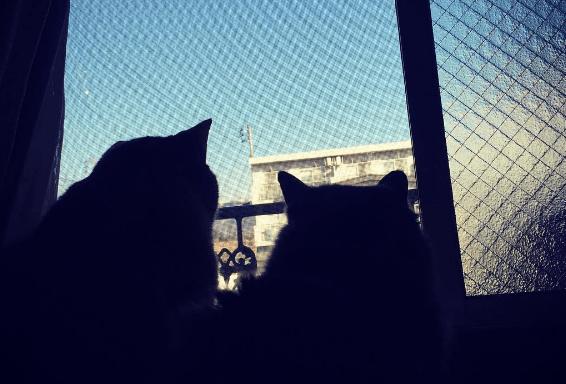 猫は脱走すると自分で帰ってこれない?