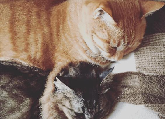 [今日から実践]猫に好かれる方法を知って仲良くなるために必要な3つの要素