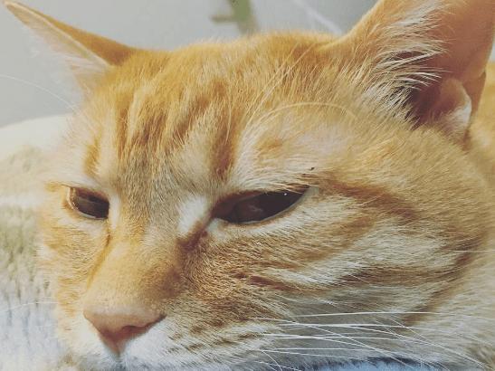 飼い主が外泊すると見せる猫の様子~うちのケース~