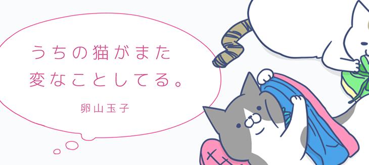 個人的にハマっているおすすめ猫漫画 厳選3作品
