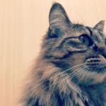 野良猫との暮らし方と保護した時に必要になるものまとめ