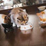キャットフードの正しい保存方法と猫に喜ばれる与え方とは?