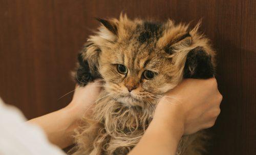 [猫譲渡情報]保護猫の里親になれる岩手の施設まとめ