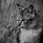 地震が起きたらどうやって猫と避難すればいいの?災害時の対策と準備まとめ