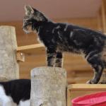 口コミから考える岩手県盛岡市でおすすめの猫カフェってどこ?