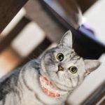 ペットショップで猫を買うと病気のリスク!?購入してはいけない4つの理由とは?