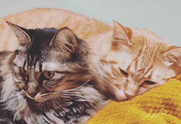 うちの猫たち「にゃんだむ」と「アン」について