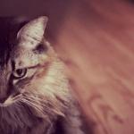猫を飼うならミックス(雑種)がおすすめな4つ理由