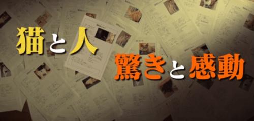 """ドキュメンタリードラマ """"猫探偵の事件簿""""あらすじとキャスト、ペット探偵とは?"""