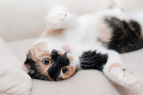 猫は人の言葉がわかる生き物?どこまで理解しているのかまとめ