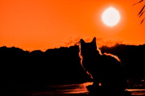 [具体例]猫が迷子になった時どうする?実際のケースから考える捜し方を解説