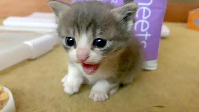 保護2日目の子猫