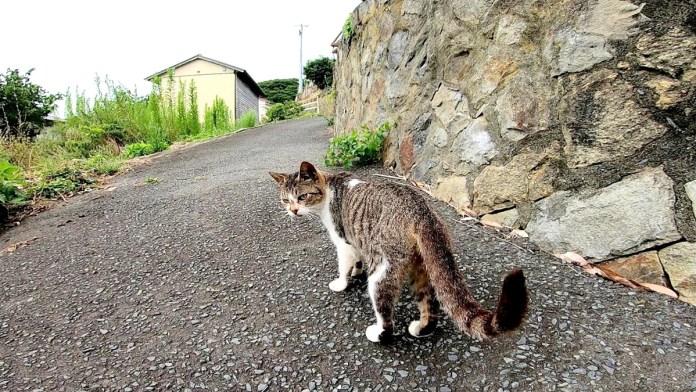 ついて くる 野良猫