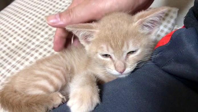 膝を枕にしたい子猫