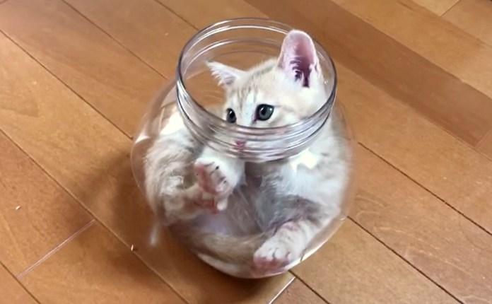 容器に入った子猫