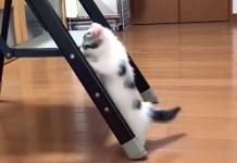 チャレンジ精神旺盛な子猫