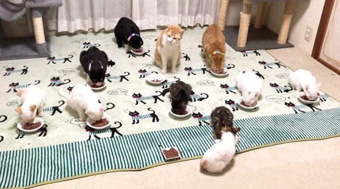 たくさんの猫達が一緒に食事