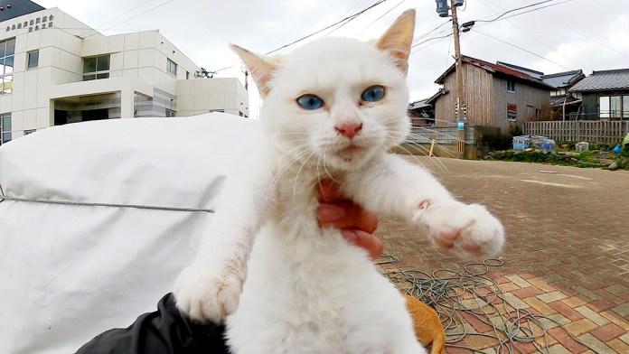 可愛い子猫