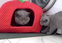 初めて出会った猫達