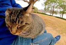 膝でくつろぐ猫