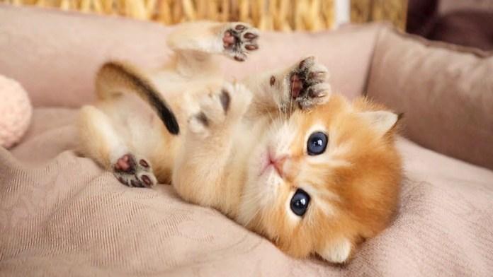 ひっくり返る子猫
