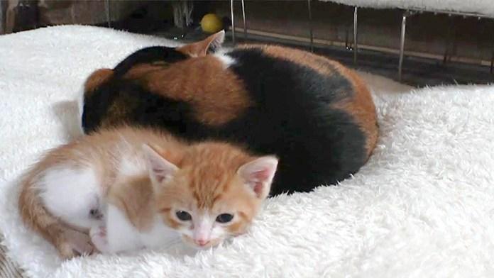 猫部屋に引っ越した子猫