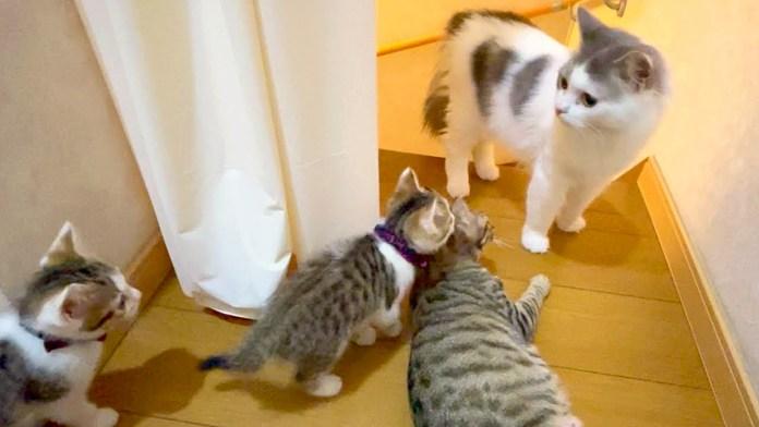 階段チャレンジする子猫