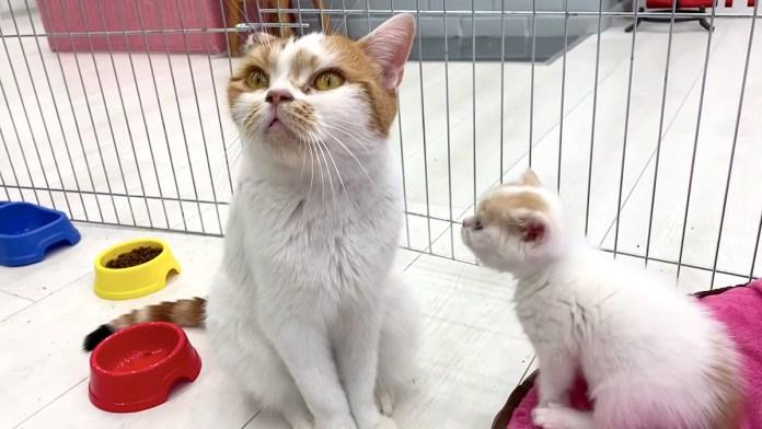 お母さんと遊びたい子猫