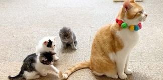 シッポに興味津々の子猫達